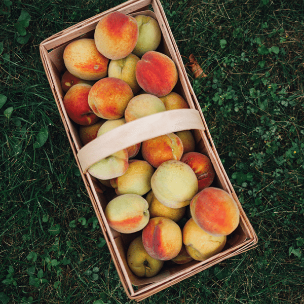 rectangle basket of peaches sitting on green grass