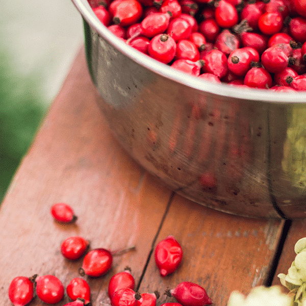 rose hips in a metal bowl on a table with rose hips around it.
