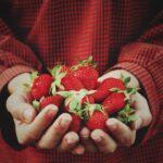 fresh strawberries in hands