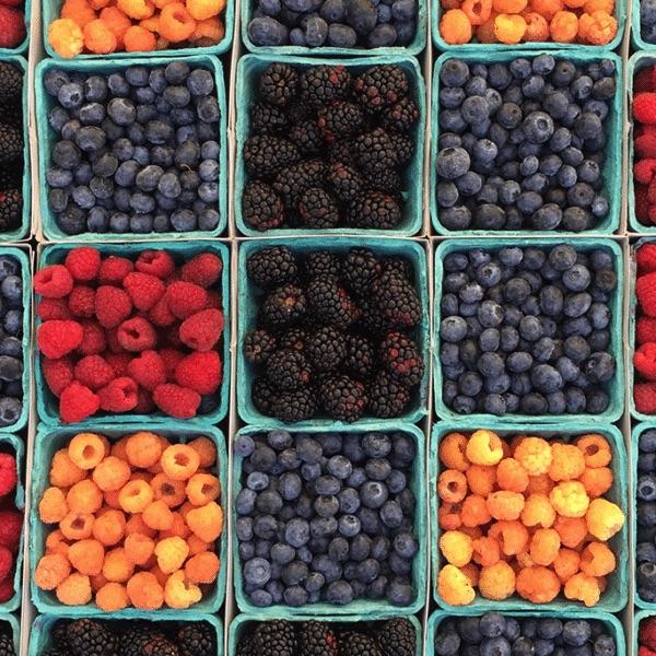 rows of bushels of berries
