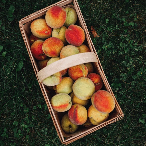 wooden basket filled with fresh peaches on a lawn