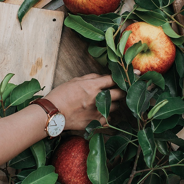 a woman's arm, wearing a watch, reaching into a bunch of greenery and apples